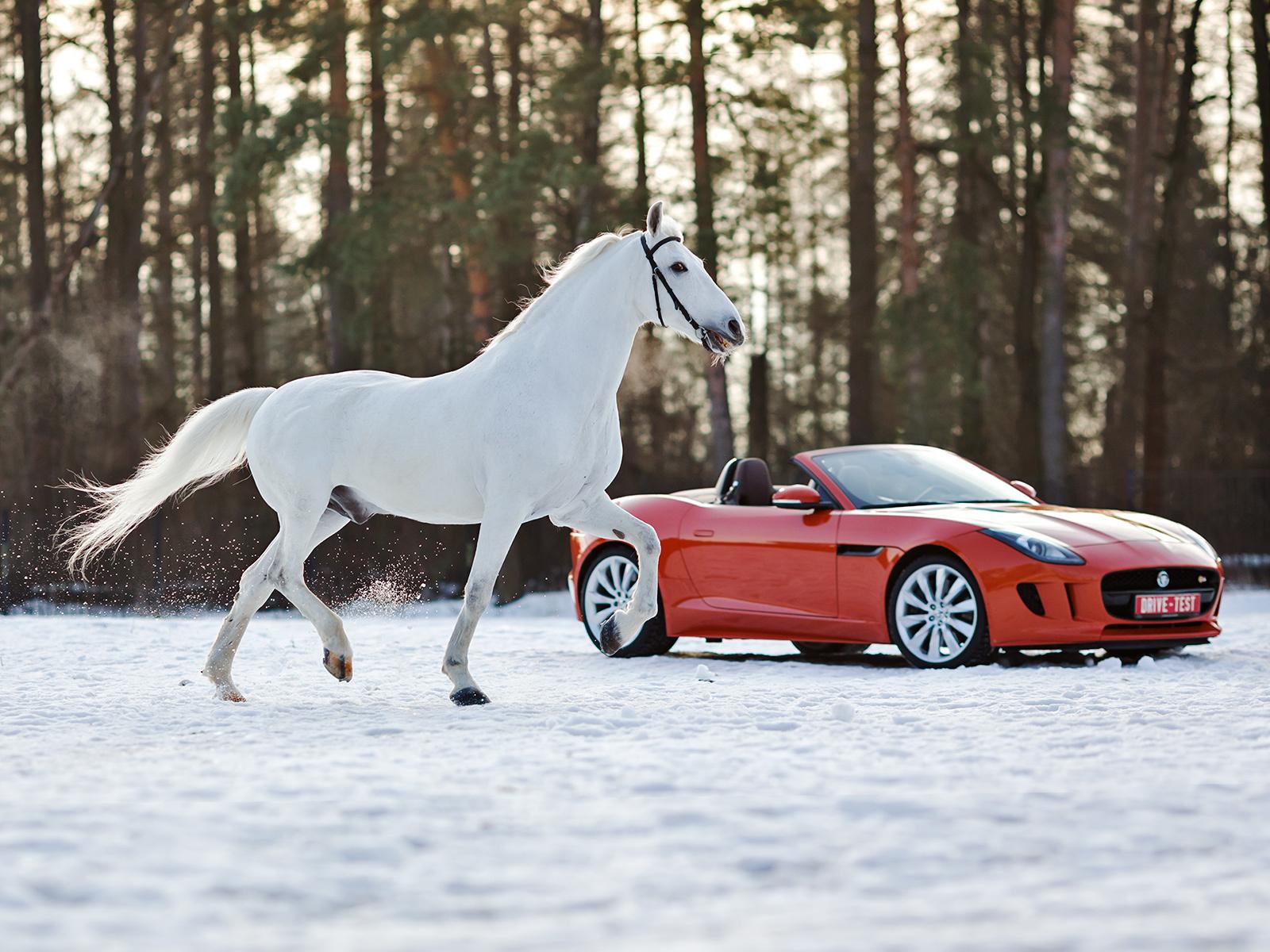 Почему мощность авто измеряется в лошадиных силах